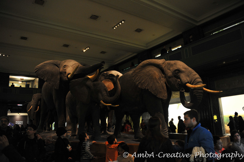 2013-12-30_AMNHMuseum@NewYorkNY_24.jpg