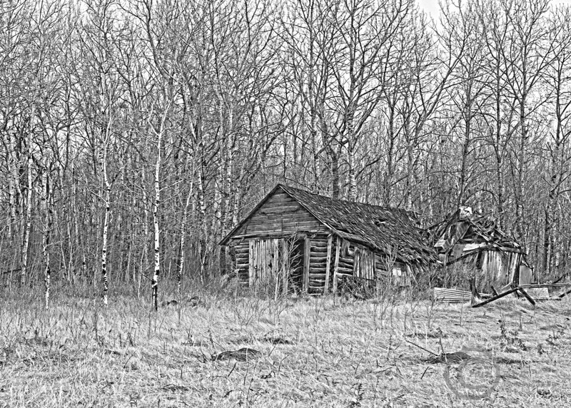 Shed in the Woodsbw.jpg