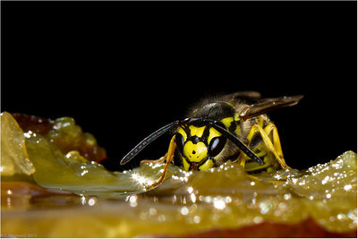 Bees, Wasps and Ants