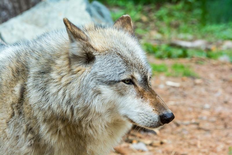 2016 Wolf Institute - Ely, MN-8.jpg