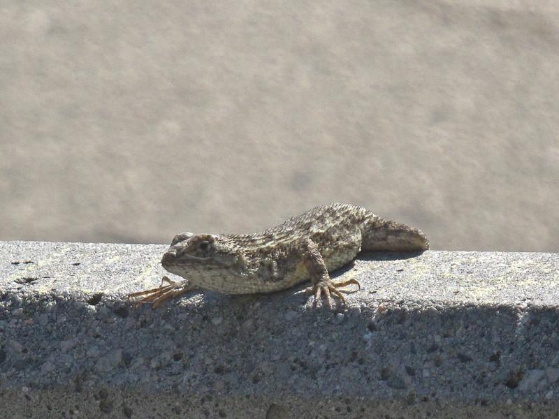sep24_lizard.jpg