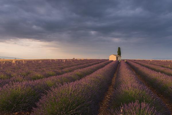 Provence lavender fields EU/UK prints