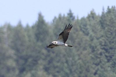 Birds at Swan River