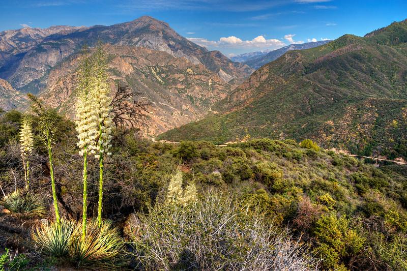 51 Kings Canyon