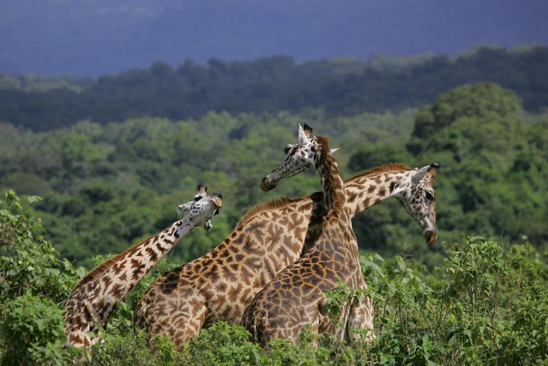 Tanzania July 2008-124.jpg