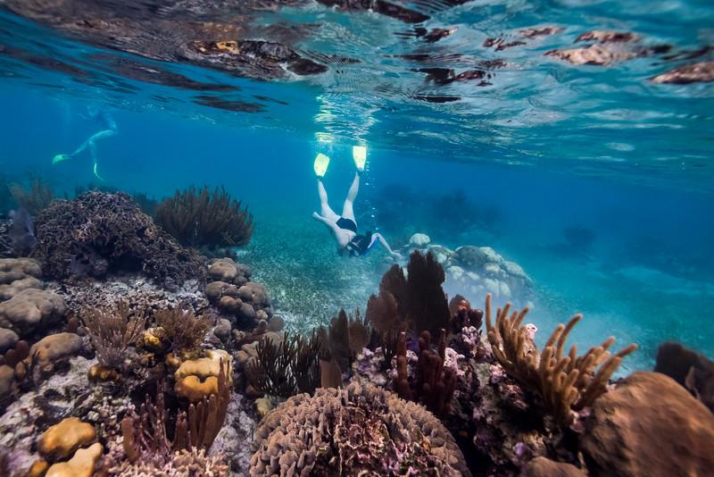 Tourists snorkeling, Turneffe Atoll, Belize Barrier Reef, Belize