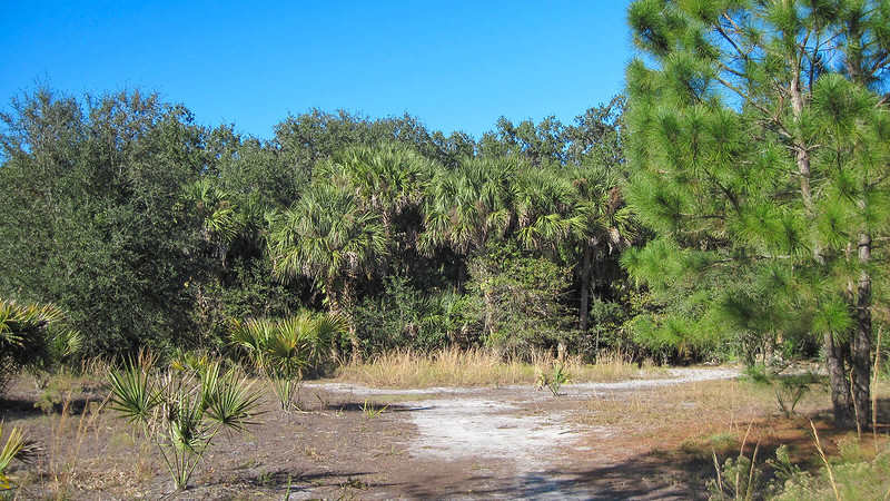 Lake Jesup East Tract