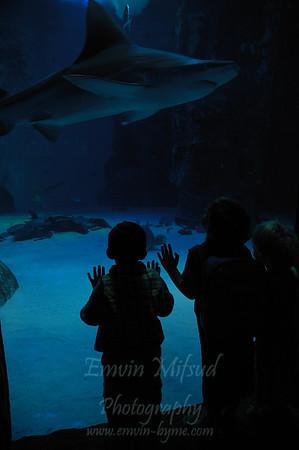 A Day at the London Aquarium