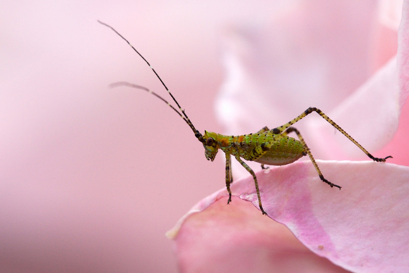 insects  477.jpg