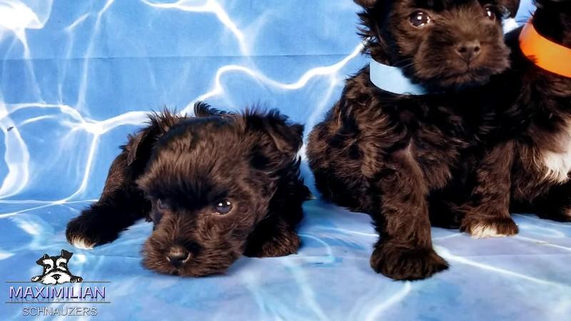 Annie Pups1.mp4