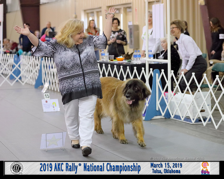 Dog Show Image from AKC 2019 Rally National Championship and National Obedience Championship