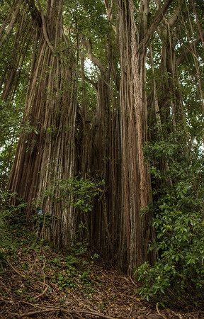 Wahiawa Gardens