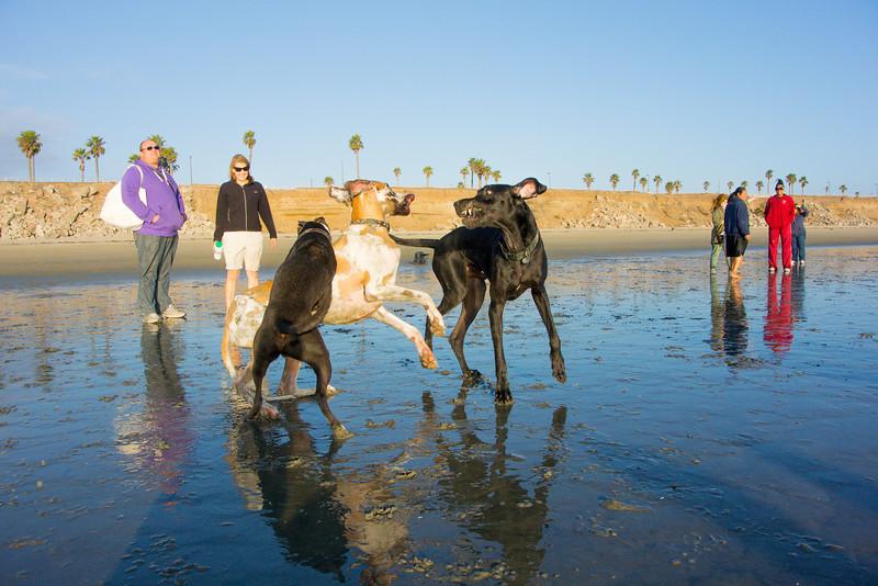 dogs_beach-65.jpg
