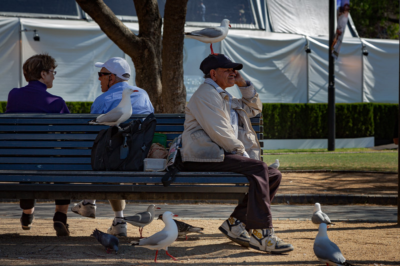 Sydney Birdman