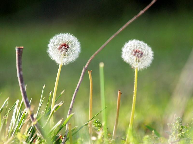 Flowers-011.JPG