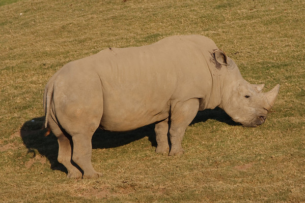 Wild Animal Park 2009