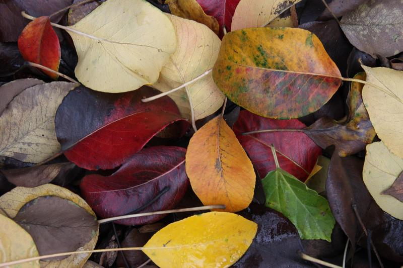 AutumnLeaves.jpg