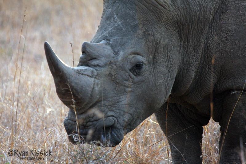 Black rhino face