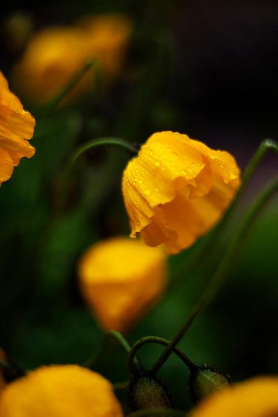 2015-05-23_Botanical_Garden_006.jpg