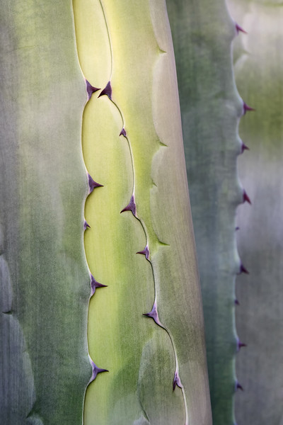 Cactus - Agave - Aloes