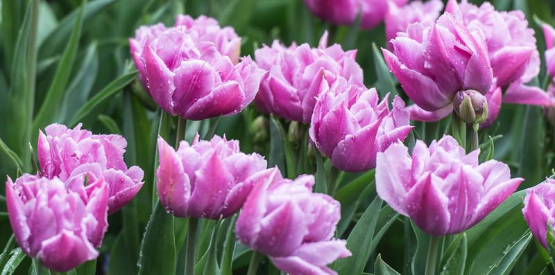 Spring_Break_Seattle_Skagitvalley_Mt_Rainier_Sanjuan_Sidney_Victoria