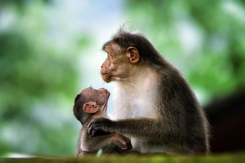 Bonding by Shekar Narayanan.jpg