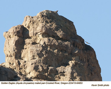 Golden Eagles P64953.jpg