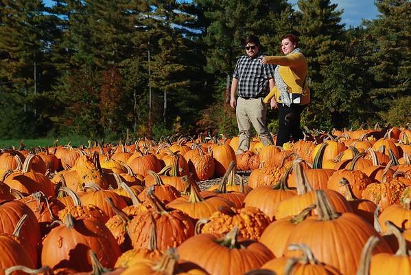 Pumpkin Picking in Tyngsboro