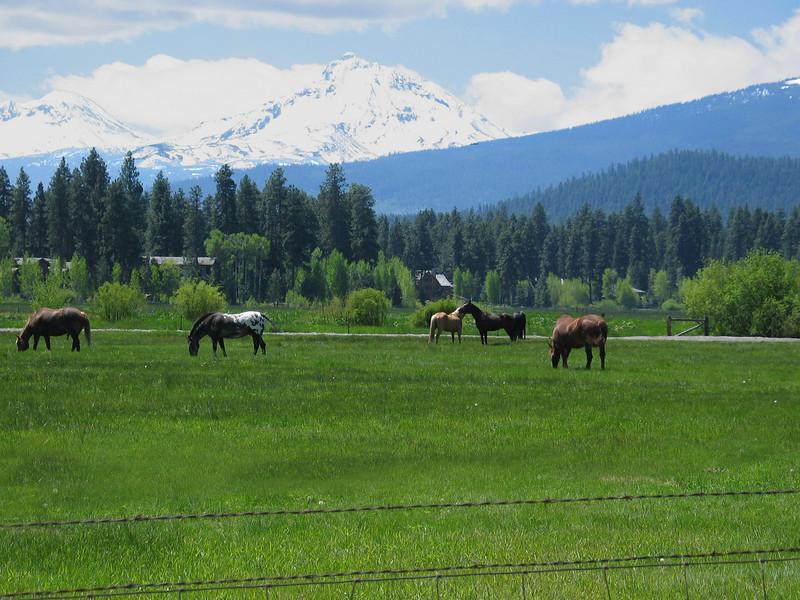 horses 052305 IMG_4696.jpg