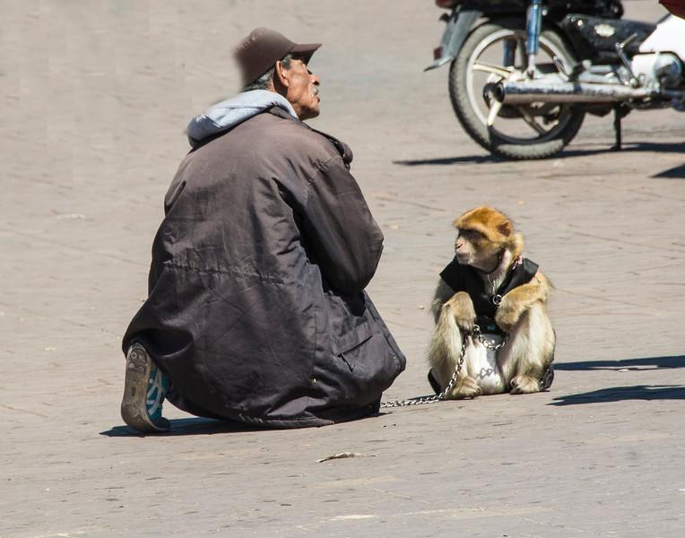 MarrakeshMonkeyManDSC_9041.jpg