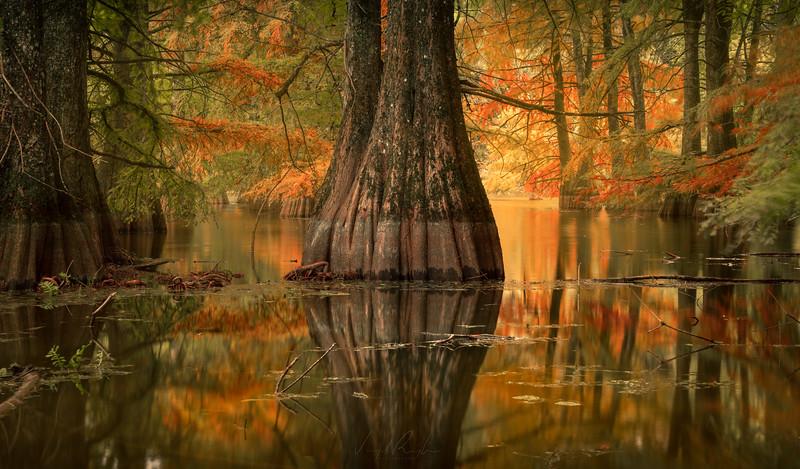 Autumnal & Mystical Woodlands