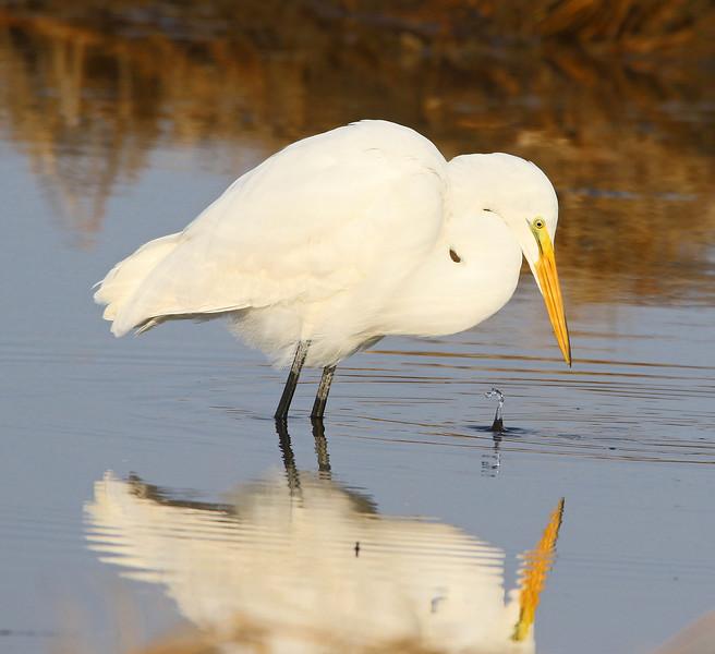 white egret water 2_edited-1.jpg