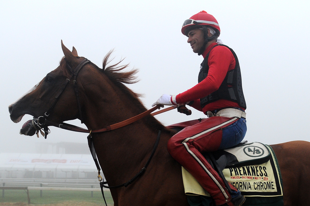 . Exercise rider Willie Delgado takes Kentucky Derby winner California Chrome over the track in preparation for the 139th Preakness Stakes at Pimlico Race Course on May 15, 2014 in Baltimore, Maryland. (Photo by Patrick Smith/Getty Images)