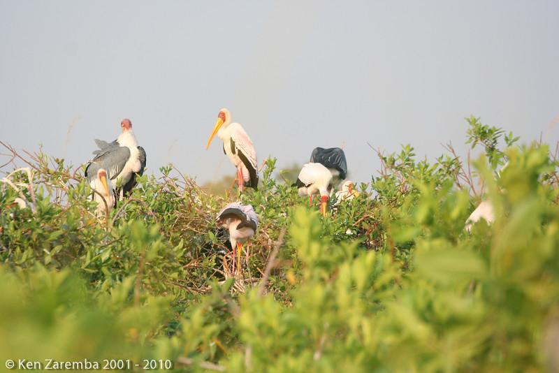 20070927-BirdsofAfrica-172