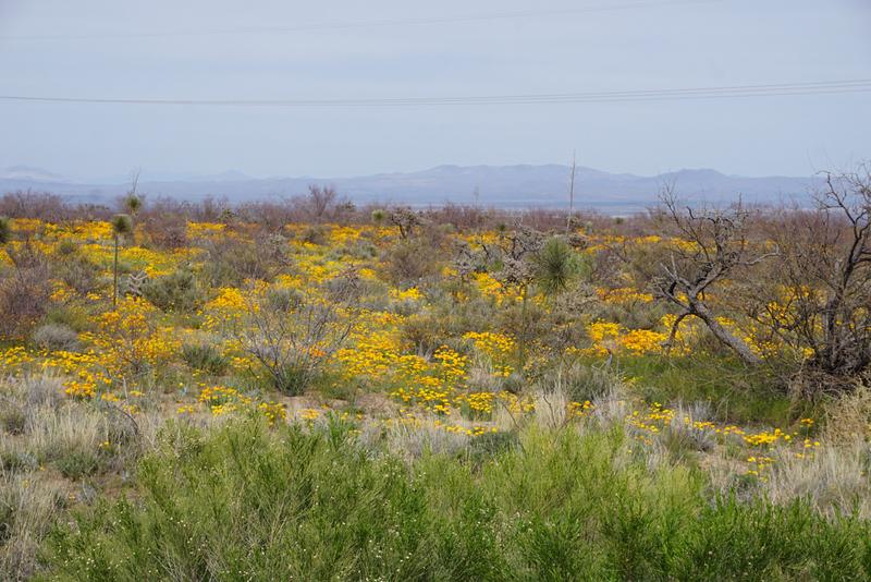 Arizona-a2.jpg