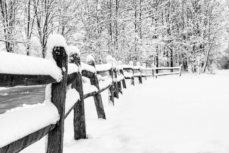 Snowed in fence