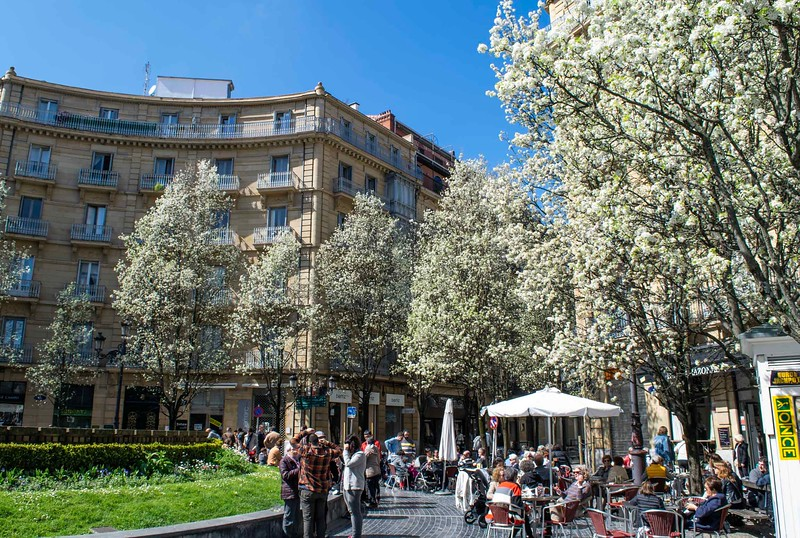 a plaza with terraces covered by blooming white trees