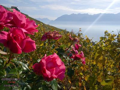 Sunny Suisse: The Lavaux Vineyards