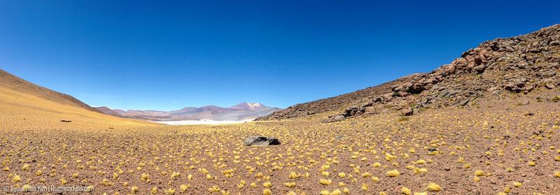 Phone_Atacama-5916.jpg