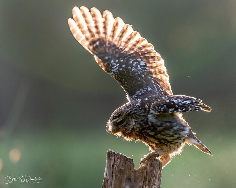 The Little Owl Shoot-6055.jpg