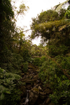 El Yunque National Rainforest Puerto Rico