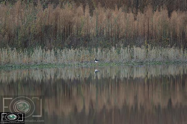 DuckShooting - North Canterbury