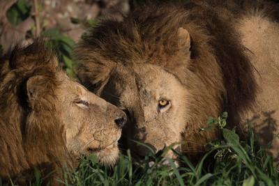 Tanzania February 2013