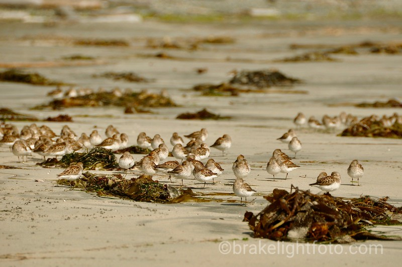 Shore Birds on Sandy Beach