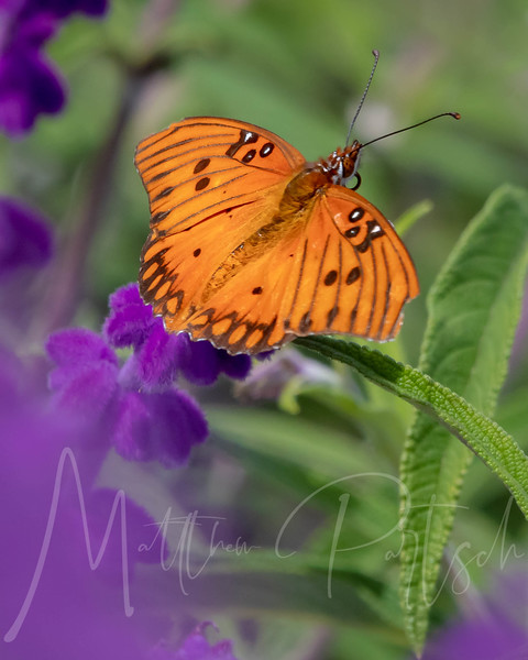 Butteryfly long shot