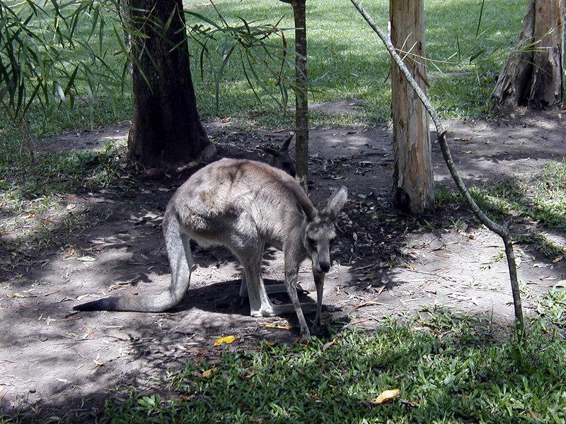 22.  Australia Zoo.JPG