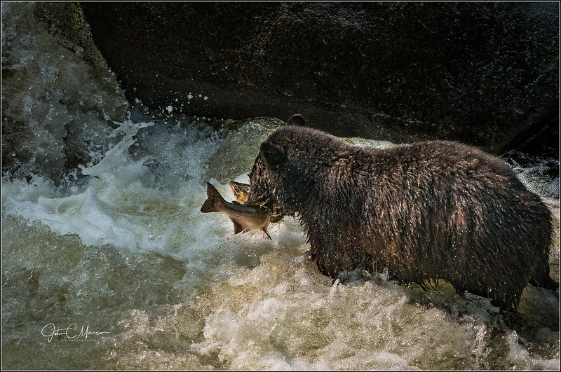 SR3_2689 Bear w fish L W.jpg