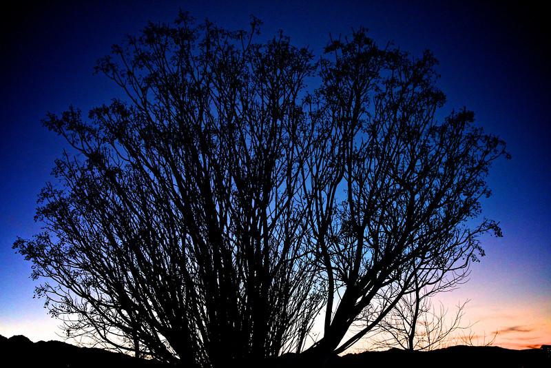 Joshua Tree 5