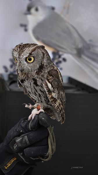 SMALL OWL 2 12-13-2014.psd