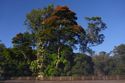 Plants and Trees Oahu